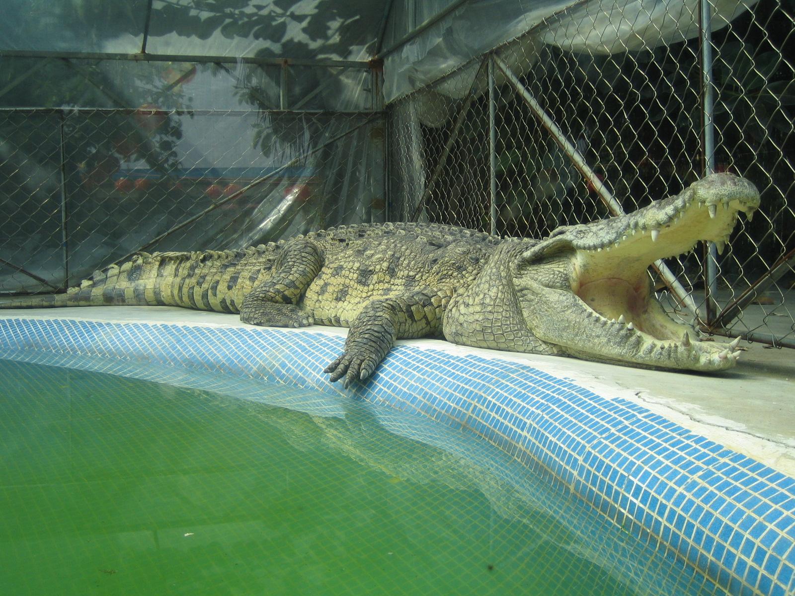 广州鳄鱼公园地址_鳄鱼公园电话地址图预订广州公园–饭统网